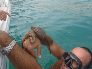 Octopus Briefing - Catch and Release Programme